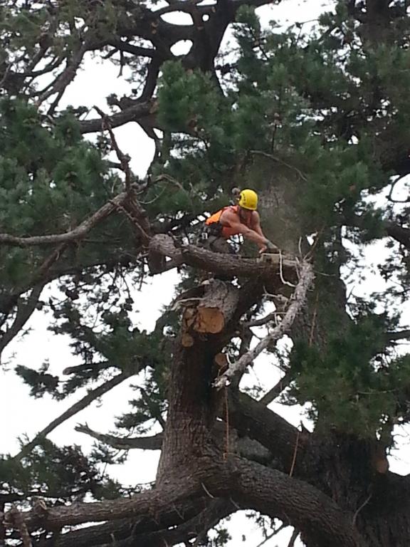 Mature Tree Pruning